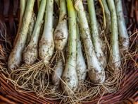 Discover tips for freezing green onions and preserving this cool-season crop from the experts at HGTV Gardens.