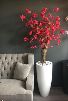 Bloesemboom Beauty, nieuw in de showroom! Koningin Julianaweg in Maasland.