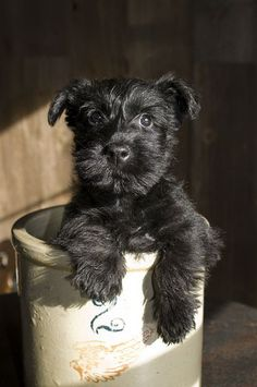 This puppy is adorable. The image of a small wide-eyed dog in what appears to be a bucket attracts the eye in a less is more way.