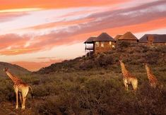 Zandibela is a acre 5 Star private game lodge situated close to the breathtakingly beautiful Baviaanskloof in the Eastern Cape, South Africa. Game Lodge, Private Games, Kwazulu Natal, Out Of Africa, Game Reserve, Africa Travel, Wilderness, Adventure Travel, South Africa