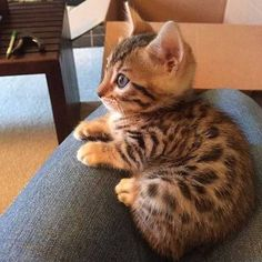 She is adorable!  Notification ON   #kittens_of_world and...