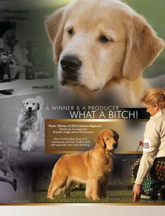 BIS BISS GCH CH Summits Emery Its In The Bag SDHF OD (1/18/2009-) Golden Retriever