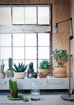 Cacti, Plants, green, ‪#‎urbanjunglebloggers, urban jungle http://blog.bodieandfou.com/