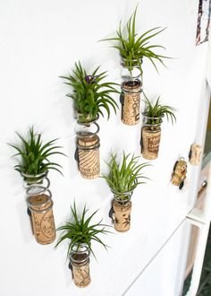 More creative planter ideas this time it's reusing wine corks. Looks grea More creative planter Air Plants, Cactus Plants, Indoor Plants, Hanging Plants, Indoor Herbs, Indoor Gardening, Air Plant Display, Plant Decor, Succulents Garden
