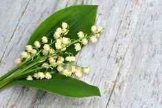 national flower of Finland lily of the valley Lily Of The Valley, Independence Day, Food Pictures, Finland, Wild Flowers, Nostalgia, Kielo, Spring, Historia