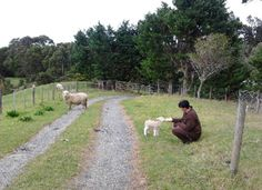 Feed sheep! Overlooking beautiful Taurikura Bay at base of majestic Mt Manaia,Whangarei Heads, 1 Bedroom, 1 Bath, Sleeps 2