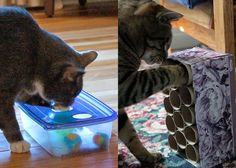 DIY Cat Puzzle Tutorials// these are great! I made the Tupperware one, and my cat loves it!