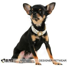 "$30.99 Is Pet Designer Pet Jewelry - Audery Pearl Necklace - Size: S (8""- 10"") for Dog and Cat - 12 pieces super sparkly Swarovski Crystal edging water drop shell. Handmade high quality faux pearls and Swarovski crystals. Perfect for parties or events, or just making your pet look its best. Makes a perfect gift for special occasion!Sizing:Please note that this listing is for the size S: 8""- 10"" n ..."