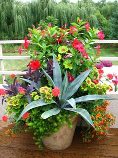 Lovely container garden with a mix of flowering annuals and tropicals