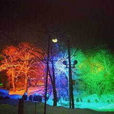 【ss22aya】さんのInstagramをピンしています。 《#私 #町 #夜 #森 #光る #ライトアップ #写真 #フォト #撮影  #きれい #カラー #世界 #アート #色 #夜 #しあわせ #カメラ #photography #me #my #forest #light #photo #art #happy #picture #night #hokkaido #town #wonder #world forest⛄ 私の町は なぜか夜になると森が光る⭐小さい頃から光ってる!!今日はどうしても間近で見たくて遠回りしちゃった》