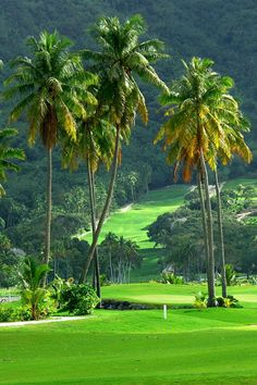 Lush and green | golf course | topical golf courses