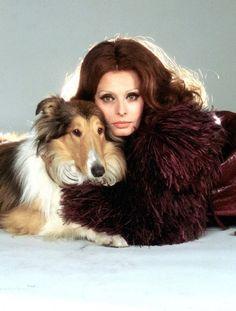 Sophia Loren - 1970's   #celebrities #pets #Dogs