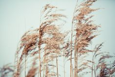 Get inspired by color combination Reap and Sow and create a design. Completely free and completely online. Reap And Sow, White Sky, Wheat Grass, Canvas Designs, Neutral Tones, You Are Beautiful, Hd Photos, Free Images, Skin Care