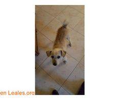 ver foto ℹ   Encontrado en el polígono ind. Arinaga.  Se encuentra en la perrera municipal de Agüimes.  En todos los navegadores: Leales.org y en todas las redes sociales: @lealesorg   #Perdido #Encontrado  Contacto y Info: Pulsar la foto o aquí: https://leales.org/perdidos-o-encontrados/perros-encontrados_1/ver-foto_i3533    Acerca de esta publicación:   Esta publicación NO ha sido creada por Leales.org y NO somos responsables de su contenido.  Ha sido publicada gratuitamente por un usuario…