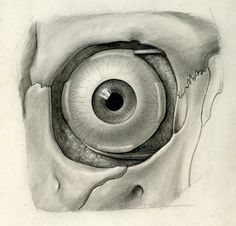 Anatomica Aesthetica: Mütter Museum Photographs and H. F. Aitken Illustrations from the Dittrick Medical History Center