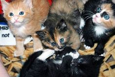 KITTENS!  Pet Project Foundation : Pro-Humane Care for Lost & Abandoned Animals