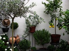 medelhavsväxter i sverige - Google Search
