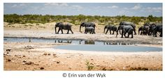elephants hearing to waterhole - Google 検索