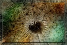 To Seed. Photo art by WB Johnston, available as prints in a large variety of sizes.