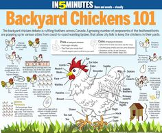Backyard Chickens 101 - infographic