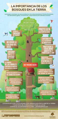La importancia de los bosques en la Tierra #infografia: