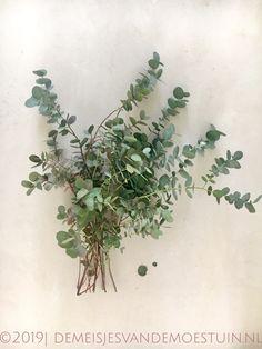 eucalyptus snoeien Seeds