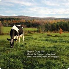 Take a look at some organic farming down on Stonyfield Farm.