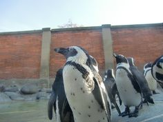 penguin with friends @ Wilhelma zoo in Stuttgart (Germany)