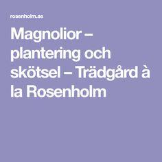 Magnolior – plantering och skötsel – Trädgård à la Rosenholm