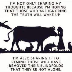 Want people to wake up and go vegan Vegan Facts, Vegan Memes, Vegan Quotes, Vegetarian Memes, Vegan Vegetarian, Why Vegan, Stop Animal Cruelty, Vegan Animals, Vegan Lifestyle