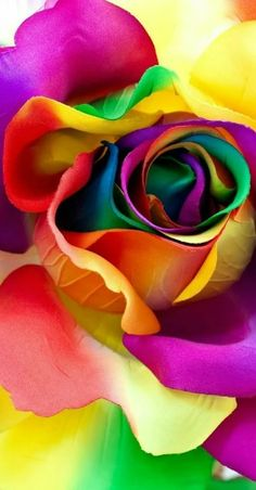 Colors and Kindergarten: Color Week - Trend Baby Rainbow 2020 Flower Phone Wallpaper, Rainbow Wallpaper, Colorful Wallpaper, Flower Wallpaper, Wallpaper Backgrounds, Beautiful Flowers Wallpapers, Beautiful Rose Flowers, Exotic Flowers, Colorful Roses
