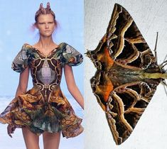 Miss Penny Dreadful: Alexander McQueen inspirational moths  I love that is fashion was inspired by nature Dan Rhodes