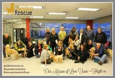 #ThrowbackThursday to Flight #2. It's hard to believe that we have celebrated the arrival of over 160 freedom flights. Your support of our #RescueMissionOfLove has saved so many Goldens from a life of despair. Thank you for your generosity and support of the work we do, both here in Canada and abroad. We are very grateful! #throwbackthursday #rescuedog #goldenretriever #adoptdontshop Very Grateful, Throwback Thursday, Rescue Dogs, Freedom, Adoption, Believe, Canada, Love, Celebrities