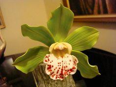 Bec's Sugar orchid