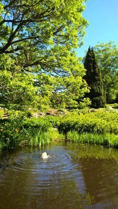 Lepaan puutarhaa  Lepaa Gardens