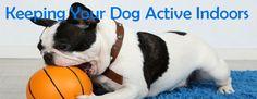 4 Ways to Keep Your Dog Active Indoors