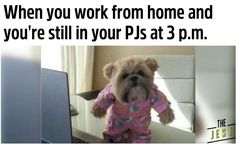 The Funniest Work-from-Home Memes to Get You Through Quarantine Funny Memes About Work, Work Memes, Work Humor, Working From Home Meme, Dog Pajamas, Funny Quotes, Jokes, Lol, Hustle