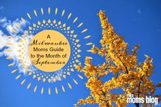 If you are looking for a guide to keep you and your family…