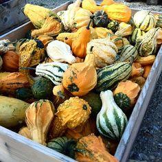Maya-Honey Lampwork: Autumn and Pumpkins