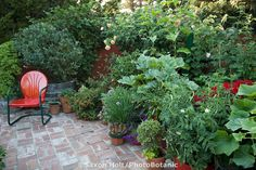 Small space patio garden with containers of organic vegetables and herbs | jardin potager