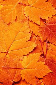 Secrets of the Seasons - tumblr