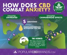How does CBD Combat Anxiety? 🤔🧠🌿 It's well researched that CBD activates the Endocannabinoid System which allows serotonin to bind to more receptors. This can translate to an improved mood and a reduction in anxiety! Learn more about CBD and the brain! Perfect Image, Perfect Photo, Love Photos, Cool Pictures, Psychiatric Medications, Holistic Approach To Health, Human Body Unit, Endocannabinoid System, Brain Training