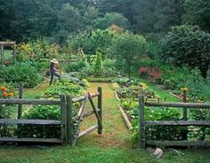 Great raised bed garden