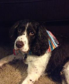 Velvet wearing her Mexican style bandana.