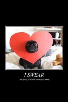 awww pug love    #pug