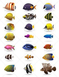 21 Colorful Tropical Fishes - Animals Characters                                                                                                                                                                                 More