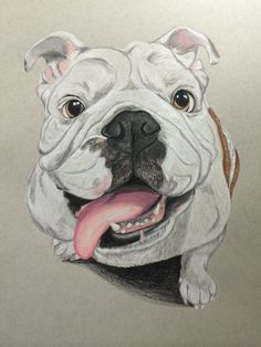 A #bulldog portrait I drew of Princess Buttercup. If u like my drawing u can order one of ur pet www.etsy.com/shop/artisticbulldog