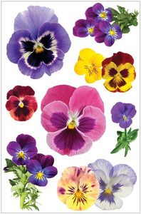 Floral > Pansies 3D Stickers - Paperhouse: Stickers Galore