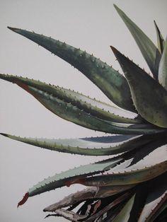 aloe  - kurt pio - oil on canvas