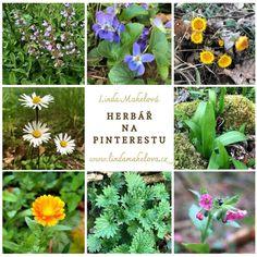 Herbář na Pinterestu Small Gardens, Pesto, Herbs, Health, Plants, Gardening, Gypsy, Easter, Diy